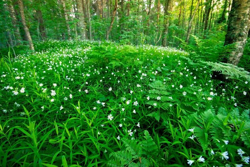 Wald und Blumen lizenzfreies stockbild