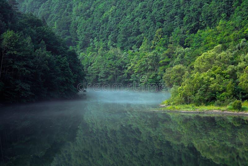 Wald und der Nebel lizenzfreie stockfotografie