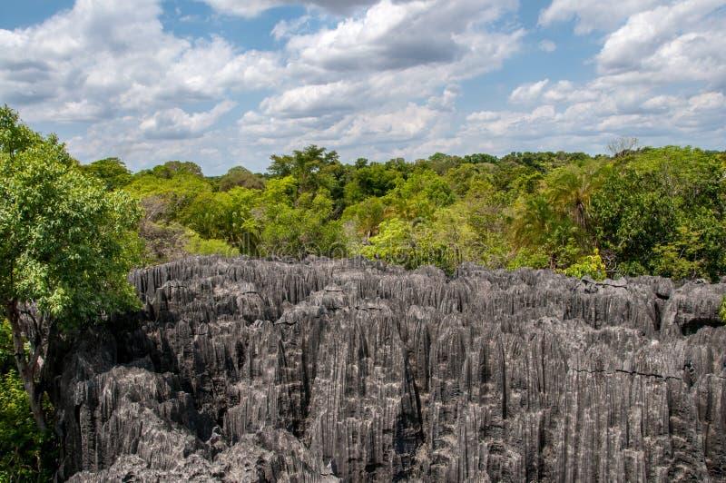 Wald und Felsen in Tsingy de Bemaraha in Madagaskar lizenzfreie stockfotografie