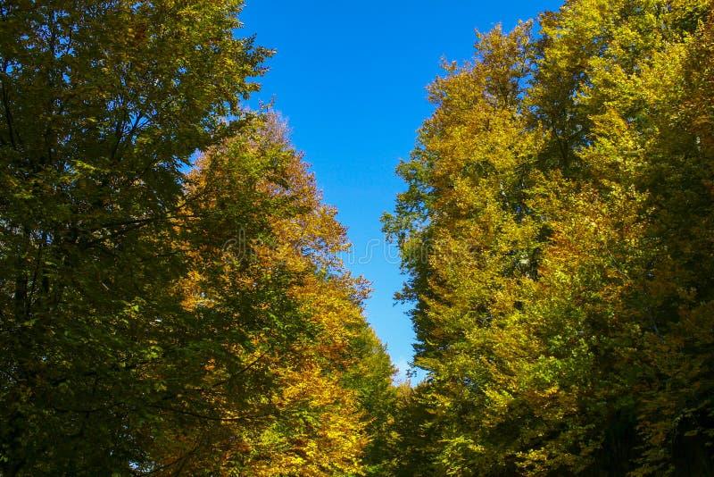 Wald und Herbst lizenzfreies stockfoto