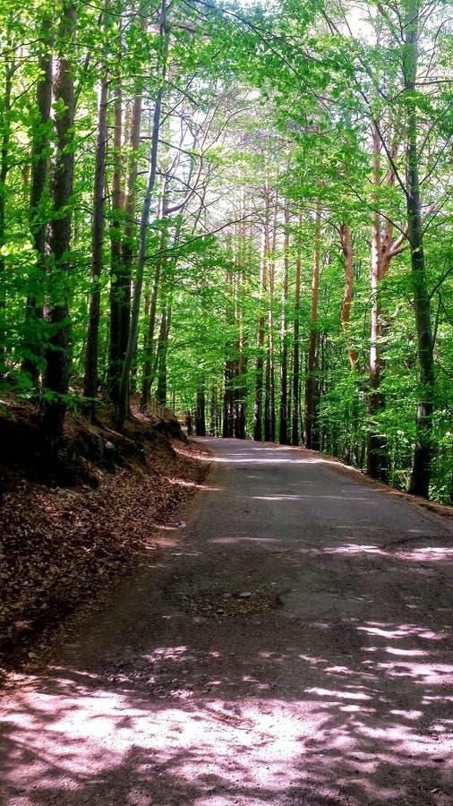 Wald und ruhiges, glückliches und Grünes lizenzfreie stockfotos
