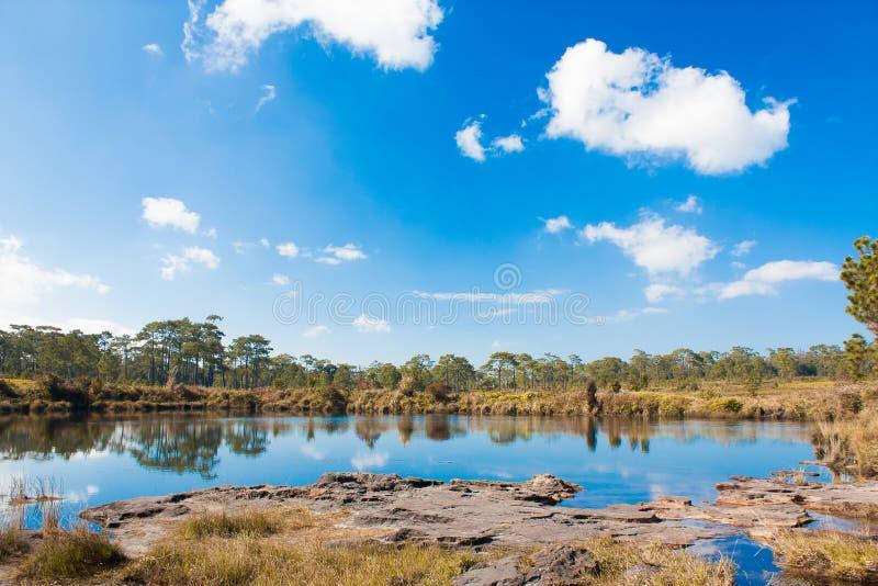 Wald und See mit blauem Himmel stockfotos