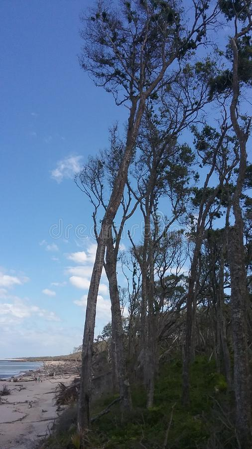 Wald und Strand lizenzfreie stockfotos