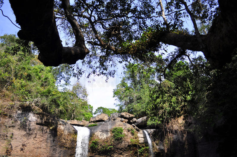 Wald und Wasserfall stockfoto