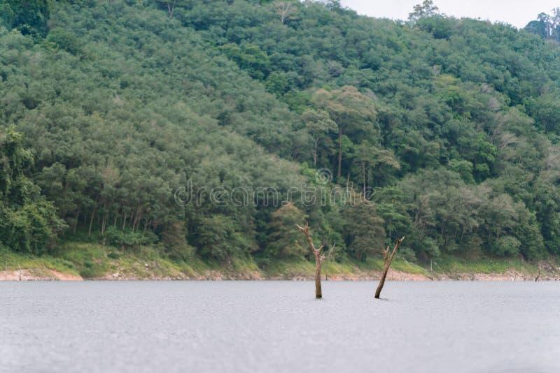 Wald- und Wasserlandschaft bei Hala-Bala Wildlife Sanctuary stockfotografie