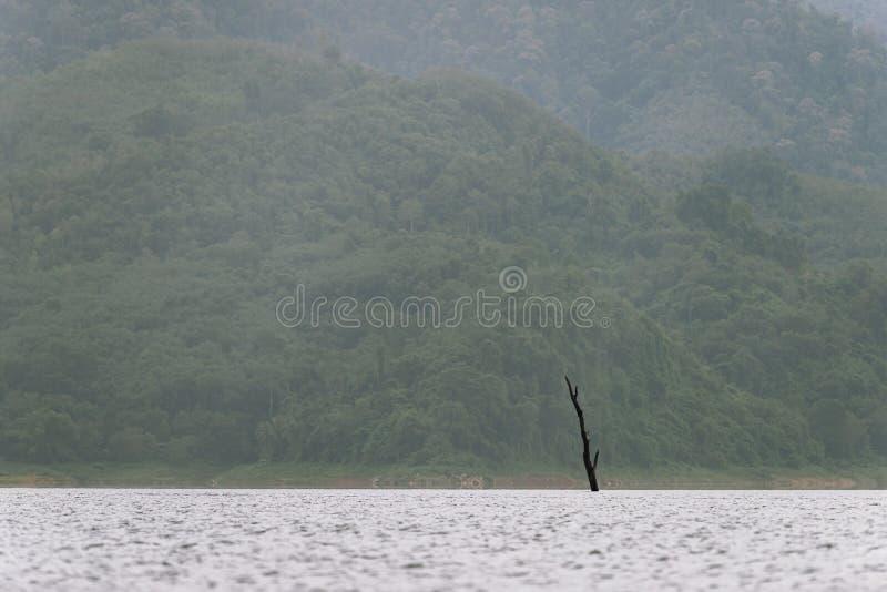 Wald- und Wasserlandschaft bei Hala-Bala Wildlife Sanctuary stockfotos