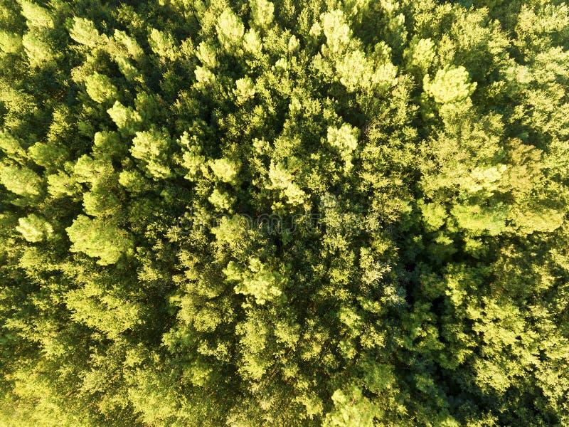 Wald in Villaines-les-Rochers lizenzfreie stockfotos