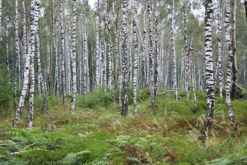 Wald voll des Suppengrüns stockfotos