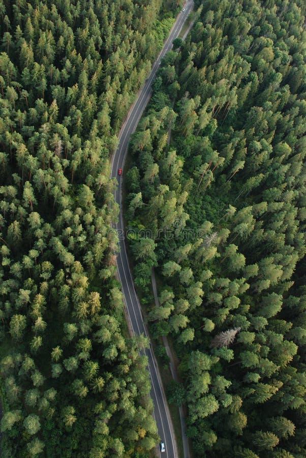 Wald von der Birdseye Ansicht stockbild