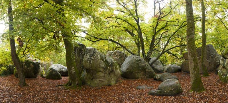 Wald von Fontainebleau lizenzfreies stockfoto
