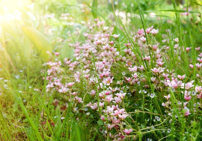 Wald von hell farbigen Blumen im Sommer lizenzfreie stockfotografie