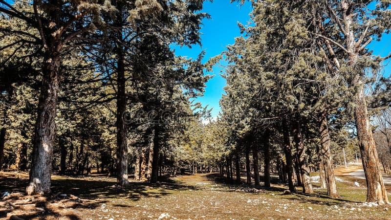 Wald von ifrane Stadt lizenzfreie stockbilder