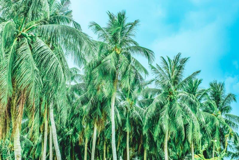 Wald von Palmen gegen den Himmel stockfoto