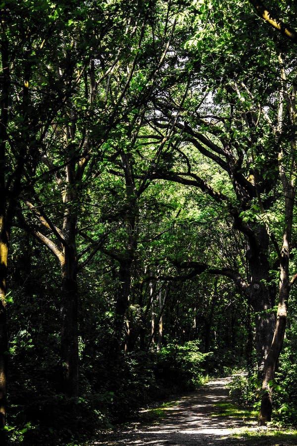 Wald von Roy stockbilder