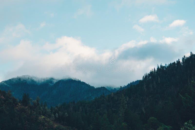 Wald Von Tannenbäumen Kostenlose Öffentliche Domain Cc0 Bild