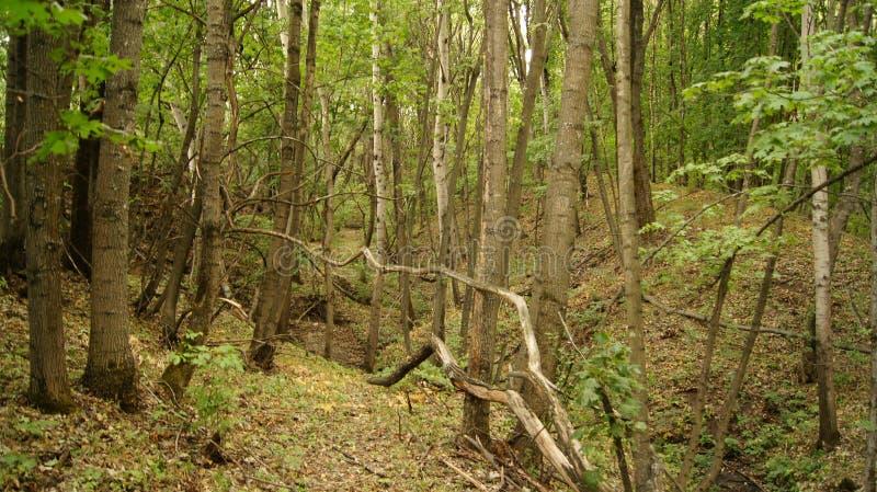 Wald, Waldland lizenzfreies stockfoto