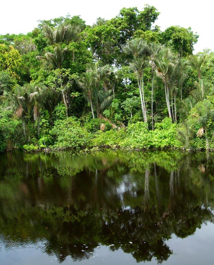 Wald widergespiegelt in einer Lagune auf dem Amazonas lizenzfreie stockbilder