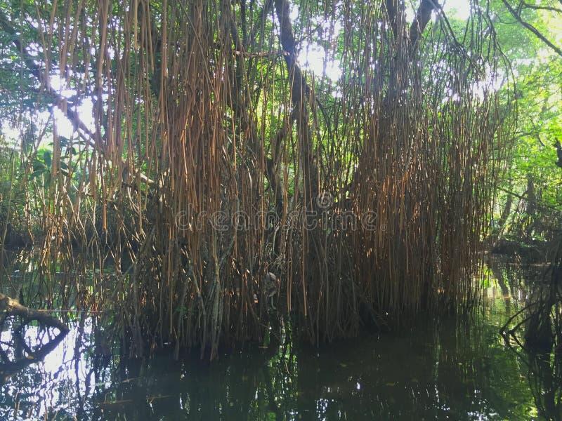 Wald widergespiegelt in einer Lagune Sri Lanka stockbild