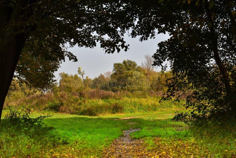 Waldansicht in Twiske in den Niederlanden lizenzfreies stockbild