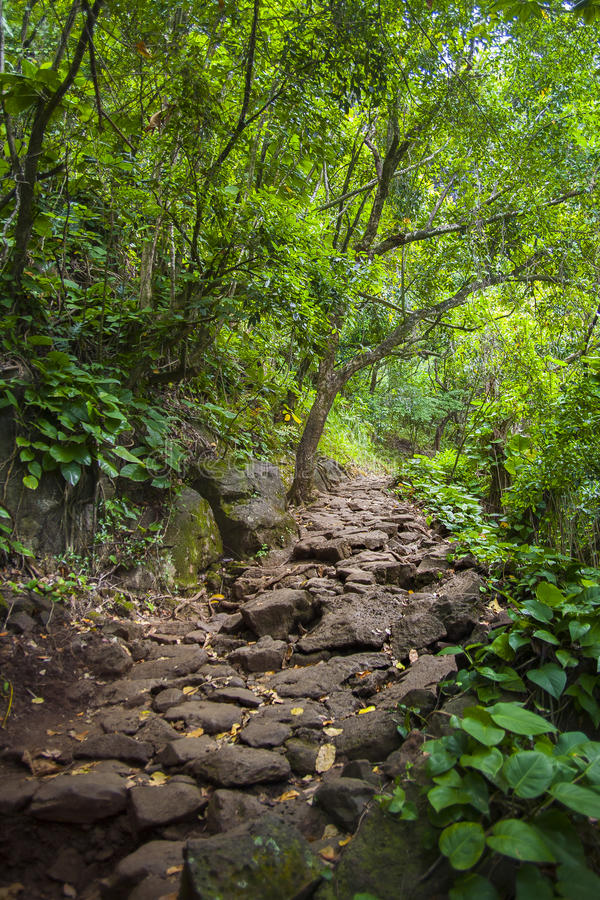Waldbahn durch dichte Wälder lizenzfreies stockbild