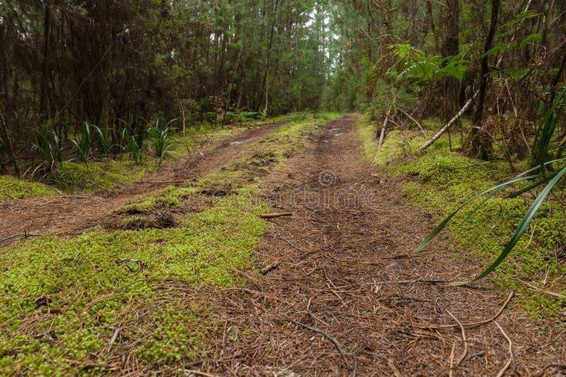 Waldbahn durch einen Wald, Tasmanien stockfoto