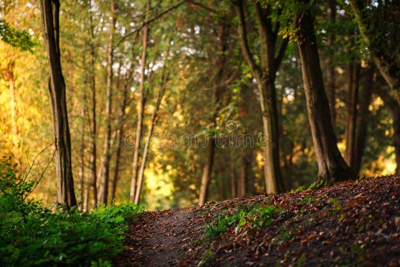 Waldbahn mit gefallenen Blättern auf Hintergrund von Bäumen lizenzfreie stockfotografie