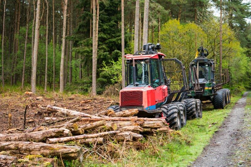 Waldbaumschneidvorg?nge und -holzschlag stockfoto