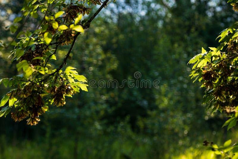 Waldbetriebsszene mit Raum, den Text gestaltet in die Mitte zu legen stockfotografie