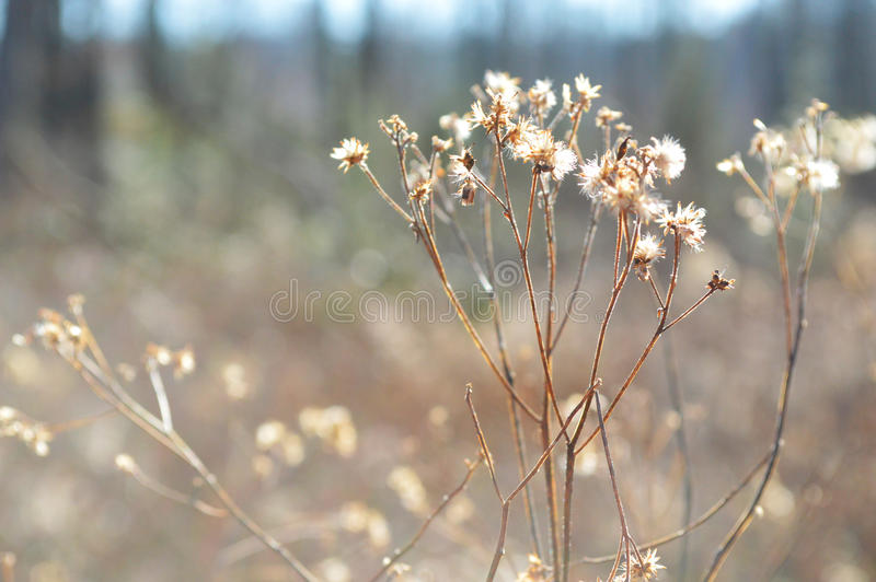 Waldblumendetail stockbild
