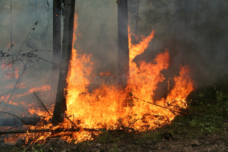 Waldbrand stockfotos