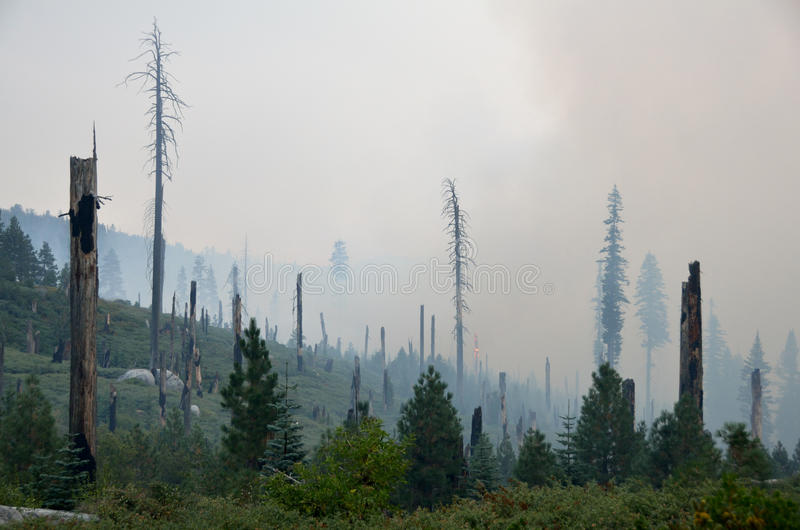 Waldbrand lizenzfreies stockbild