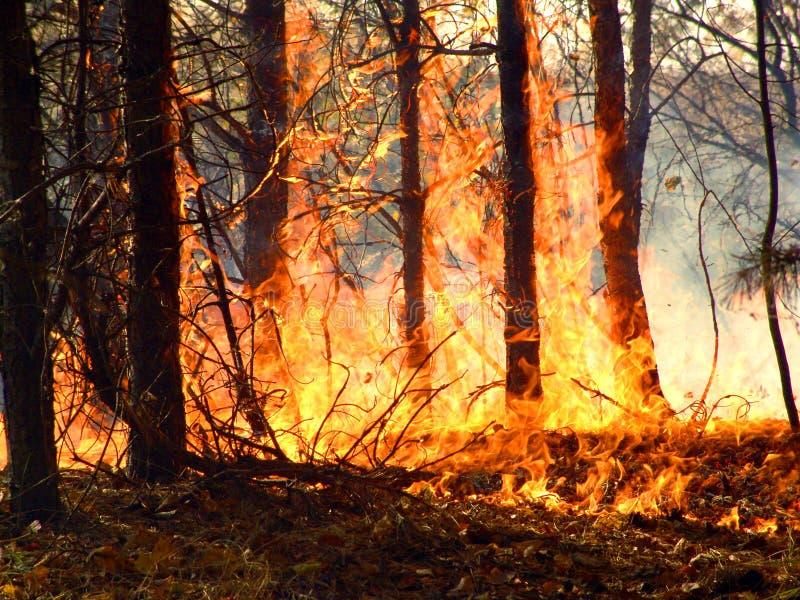 Waldbrand. lizenzfreies stockbild