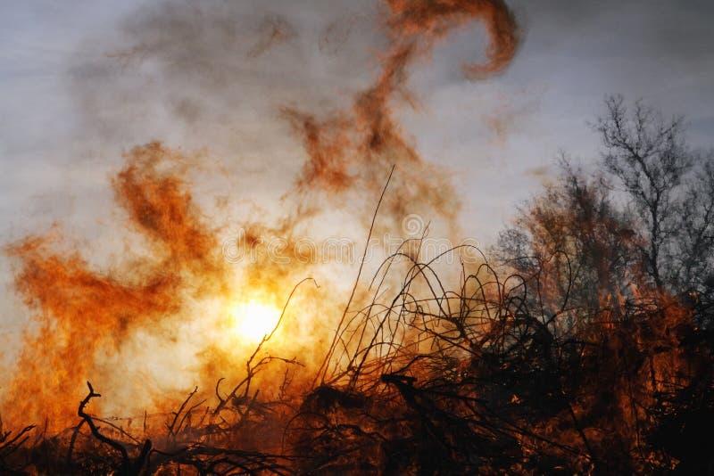 Waldbrand und Bäume lizenzfreie stockfotografie