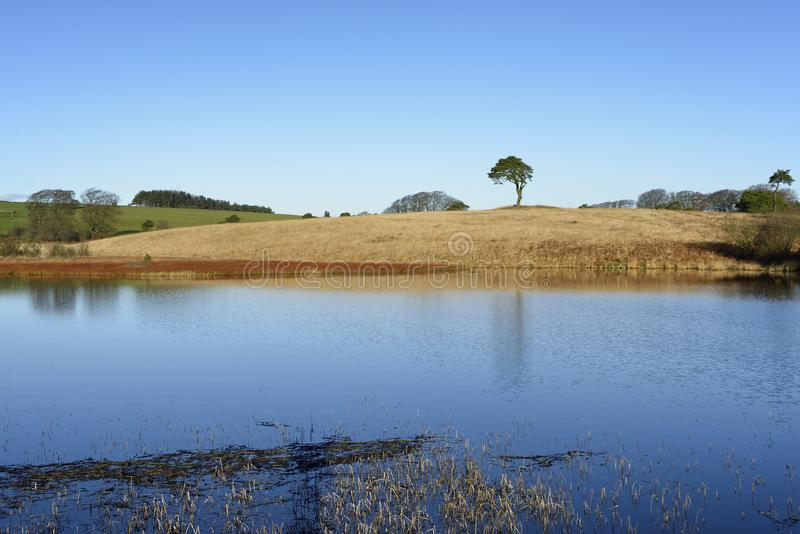 Waldegrave Pool. With Lone Pine Priddy Mineries, Mendip Hills, Somerset stock images