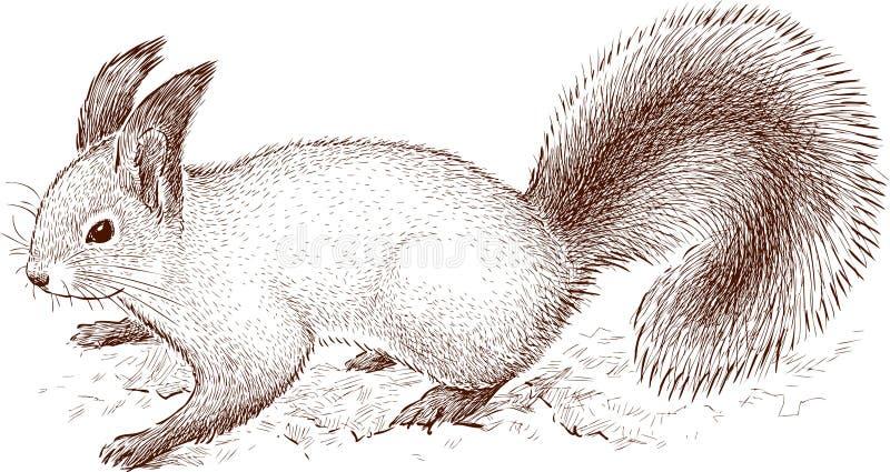 Waldeichhörnchen vektor abbildung