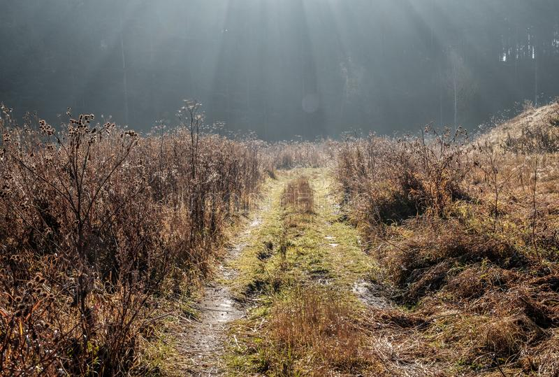 Waldfeldweg in den Strahlen des aufgehende Sonne, früher Morgen in Russland, Ural-Bezirkswald lizenzfreie stockfotos