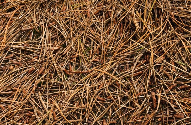 Waldfußboden lizenzfreies stockbild