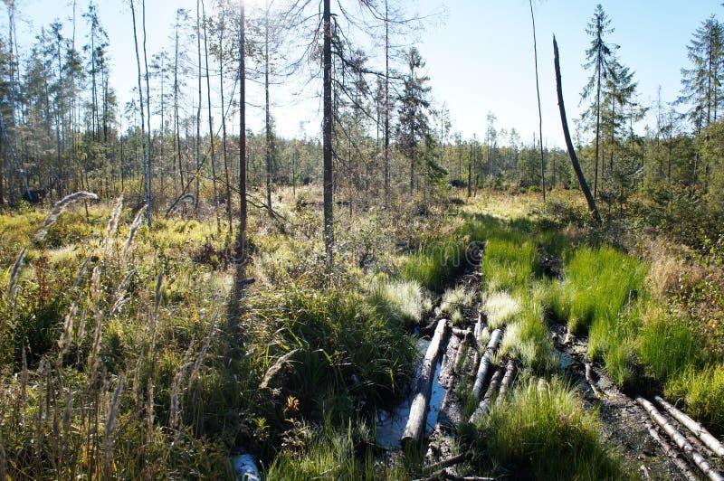 Waldhölzerne Spur auf Sumpf lizenzfreies stockbild