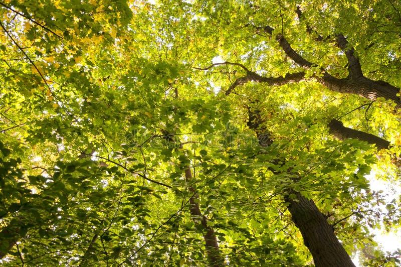 Waldhintergrund 02 lizenzfreies stockfoto