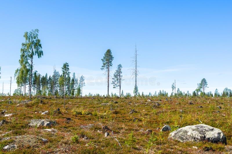 Waldholzschlag stockfotografie