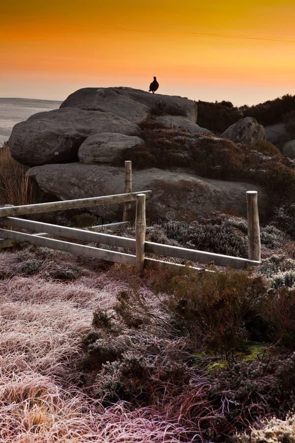 Waldhuhn auf den Felsen am Sonnenaufgang lizenzfreie stockbilder