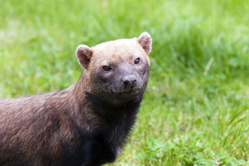 Waldhund stockfoto