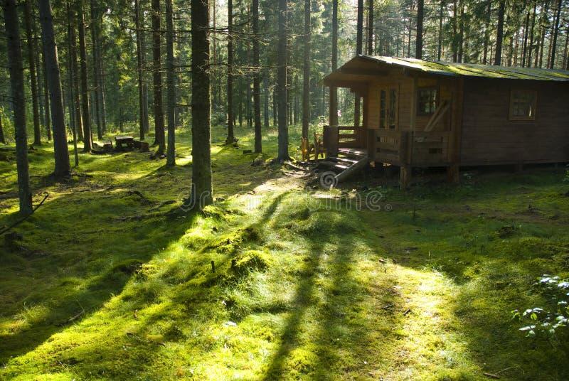 Waldkabine auf sonnigem Morgen lizenzfreies stockfoto