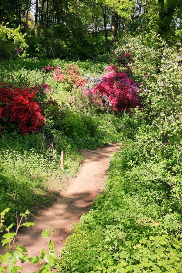 Waldland im Frühjahr stockbild