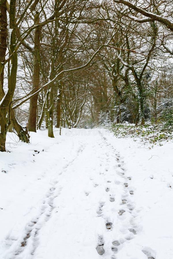 Waldland im Schnee stockfoto