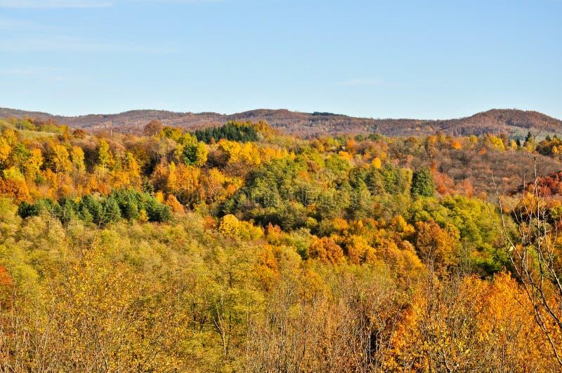 Waldlandschaft im autum stockbilder