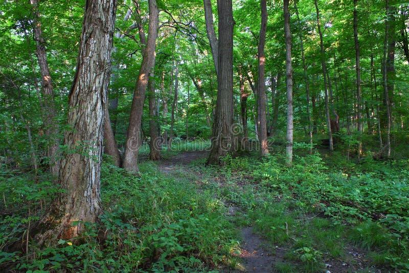 Waldlandschaft - Shabbona, Illinois lizenzfreies stockfoto