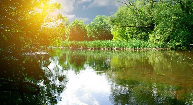 Waldlandschaft und -Flussbank in den Strahlen der hellen Frühlingssonne lizenzfreies stockbild