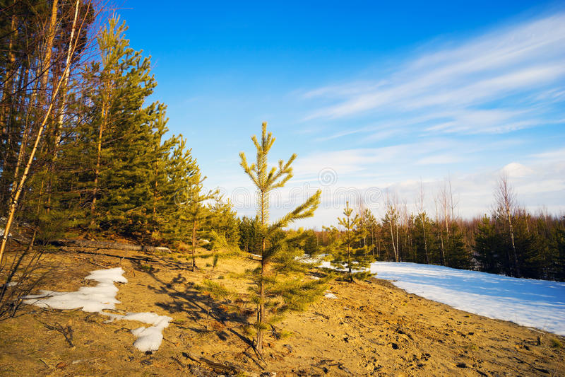 Waldlichtung am sonnigen Frühlingstag am Rand des Waldes lizenzfreie stockfotografie