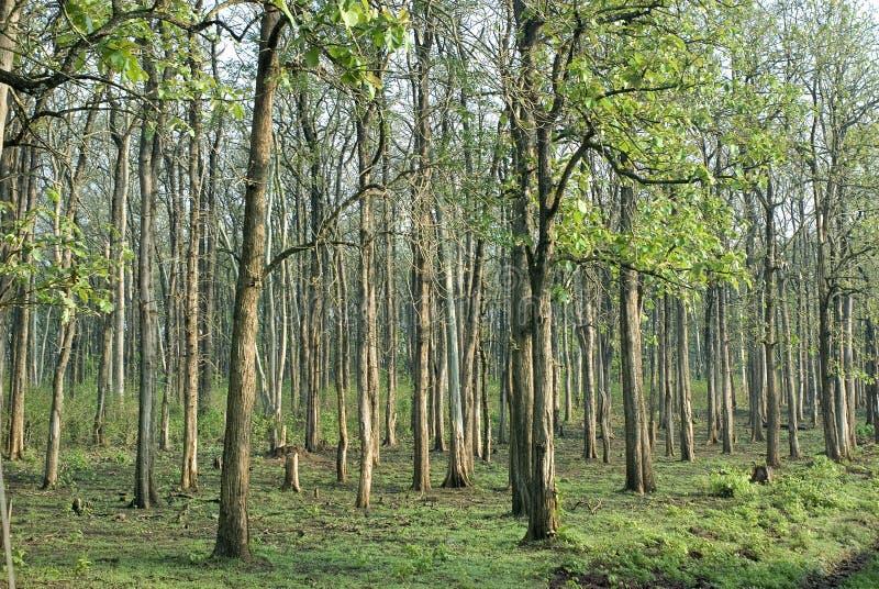 Waldmanagementbaumplantagen stockfotos